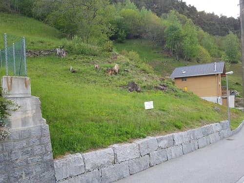 Terreno edificabile 977 m2 / Bauland 977 m2 Total 1676 m2