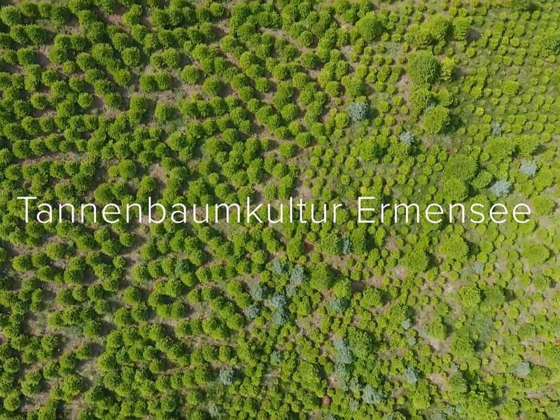 Tannenbaumkultur Ermensee