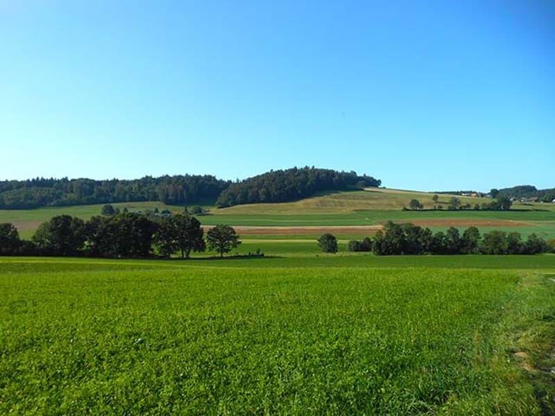 GROSSFREIBURG - GEMÜTLICHE WOHNUNG - 3.5 ZIMMER