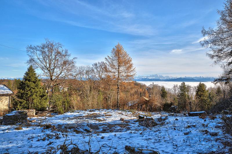 Terrain calme et verdoyant avec vue sur les Alpes