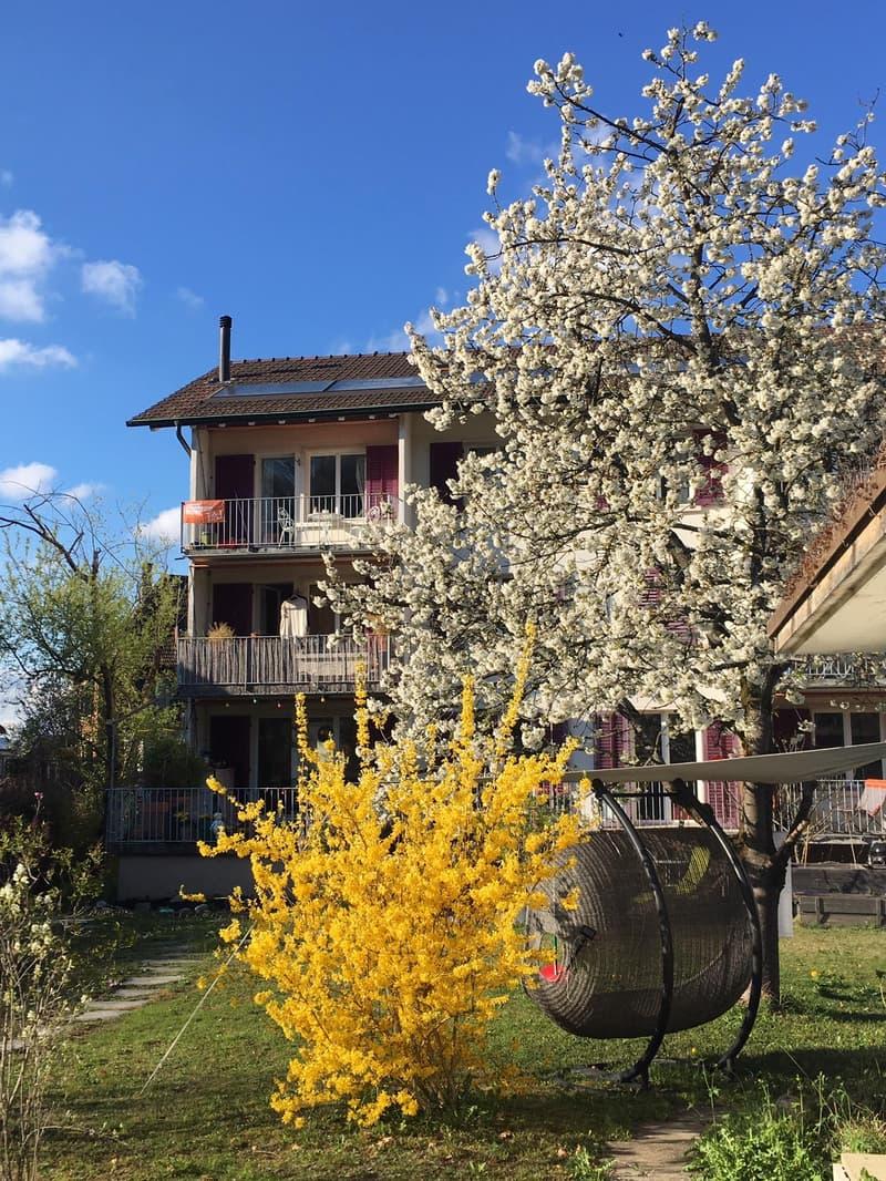 Wohnung hinter Kirschbaum 1.OG