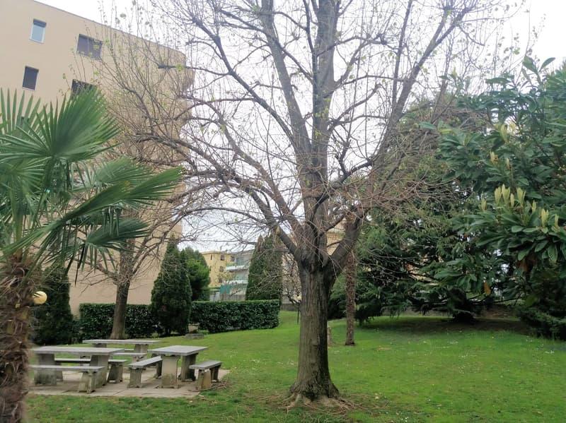 Ampio appartamento 4.5 locali con grande giardino condominiale