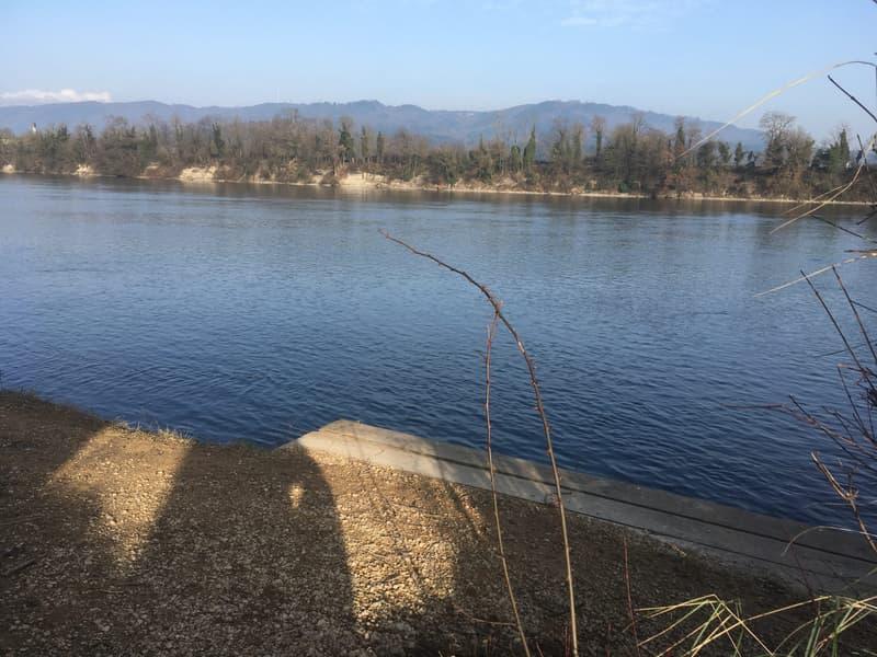 ...Verweilen am Rhein