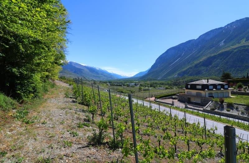 Sierre - belle parcelle à bâtir en zone villa - CHF 390.- / m2 (3)