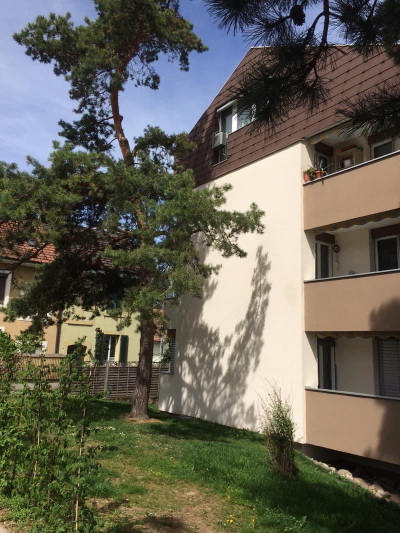 Helle, gemütliche 31/2-Zimmer Wohnung (1)