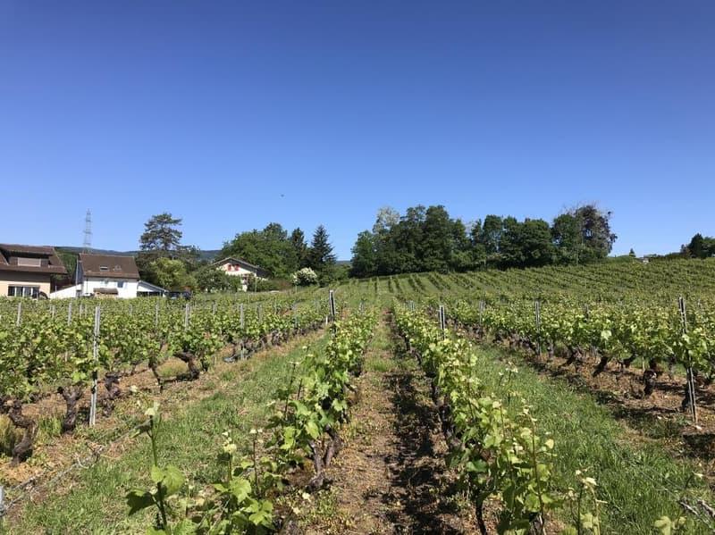 Sans vis à vis, terrasse-loggia s'ouvrant sur les vignes
