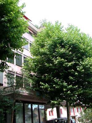 Siewerdtstrasse 7