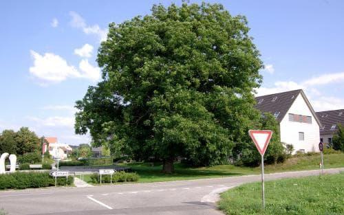 Riedmühlestrasse 31