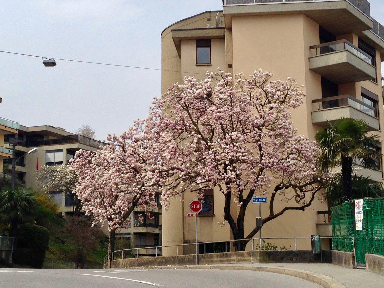 Via Calprino 23